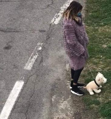 fake dog walk